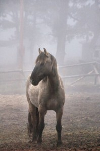 Mustang in the Mist Photo by Lee Very